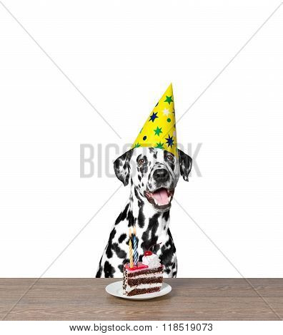 Dog Celebrating A Birthday With A Piece Of Cake