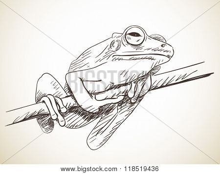 Sketch of frog, Hand drawn illustration