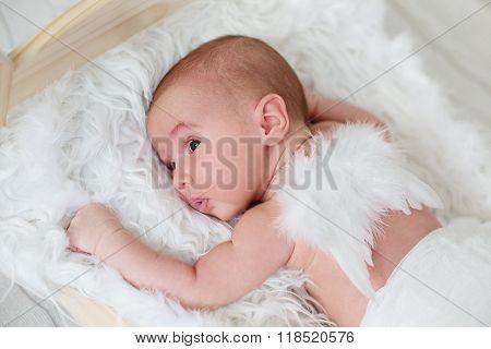 Cute Newborn Baby With Angel Wings