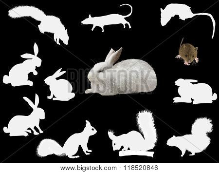 illustration with set of rodents isolated on black background
