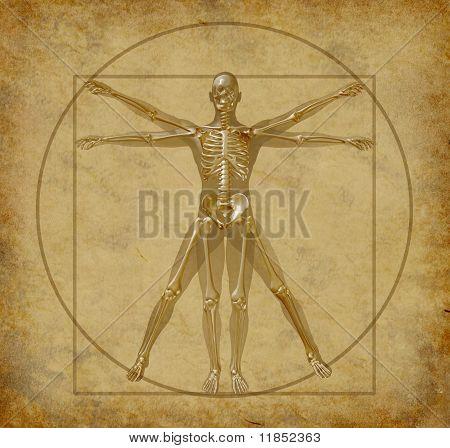 vitruvian human diagram grunge medical chart