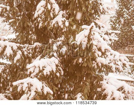 Retro Looking Pine Tree