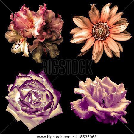 Set Of 4 In 1 Tender Soft Color Retro Flowers: Pelargonium, Roses And Decorative Sunflower Isolated