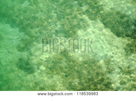 Sandbank with underwater plants