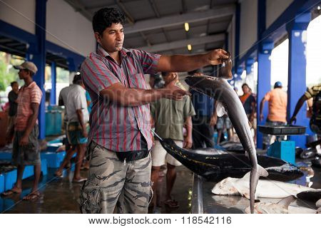 Sharks At Fish Market