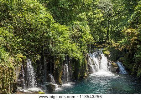Cascade under primeval forest