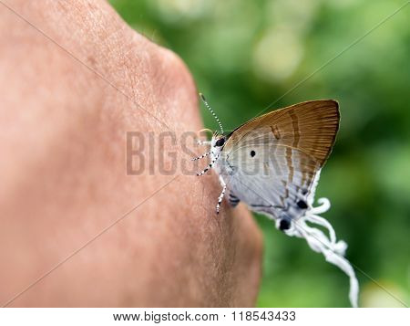 Small Butterfly Perched On A Thumb