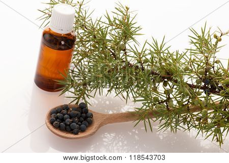Branch Of Conifers Junipers, Wooden Spoon Ful Of Blue Berries And Little Bottle Of Fresh Oil For Aro