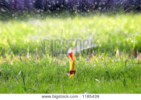 Water Sprinkler On Green Lawn
