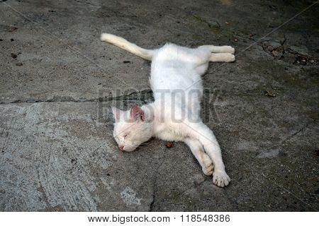 Adorable albino cat sleeping