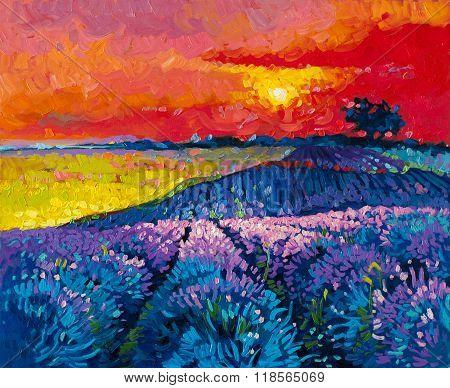 Beautiful lavender field at sunset