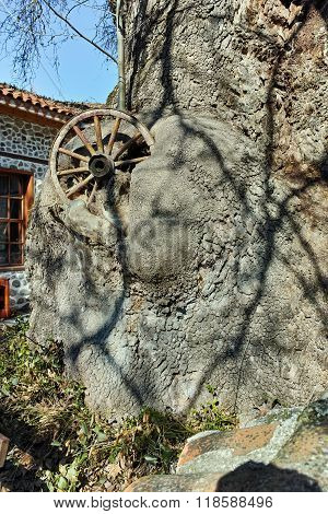 cartwheel in the venerable tree in town of Melnik, Bulgaria