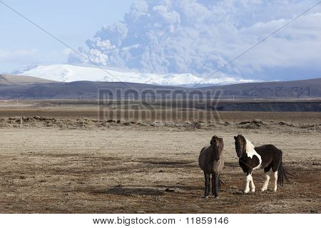 Icelandic Horses and Mt. Eyjafjallajokull Volcano Eruption in background