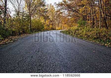 Autumn Forest, Forest Road, Fall Path In Forest With Leafs,road Passing Through The Forest,  Path In