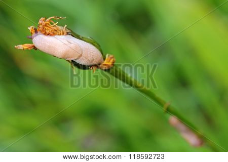 Small slugs crawling on flower petal in the green meadow during summer time, shallow depth of field
