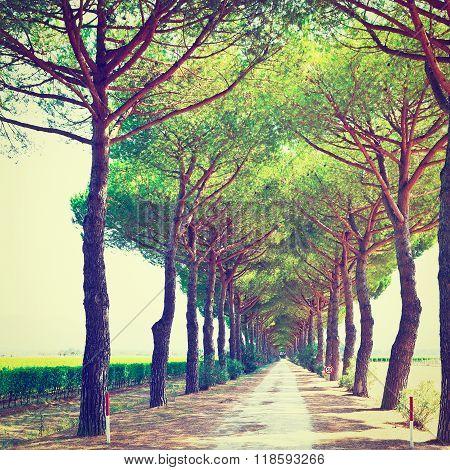 Road Between Vineyards