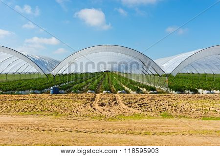 Greenhouse In Portugal