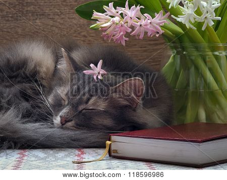 Symbol home - sleeping cat, a bouquet of flowers and a book.