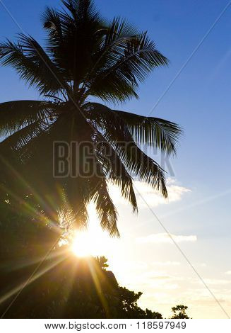 Coast Exotic Palms