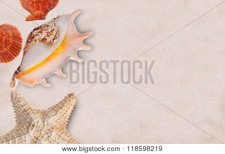 shellfishes and starfish on light send background