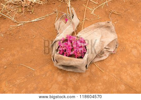 Dry Ground With Bunch Of Flowers