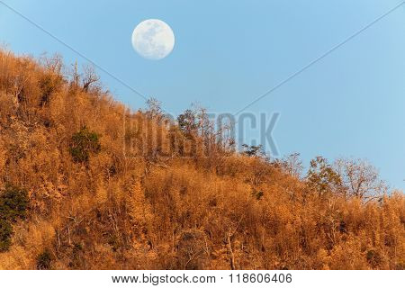 Moon rising over tropical dry bamboo forest in the Kanchanaburi province, Thailand