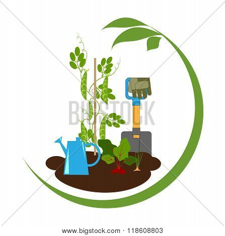 Vegetables In The Beds And Garden Tools