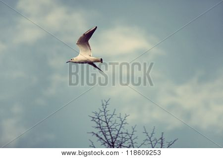 river seagull fly over the tops of trees and sky with clouds