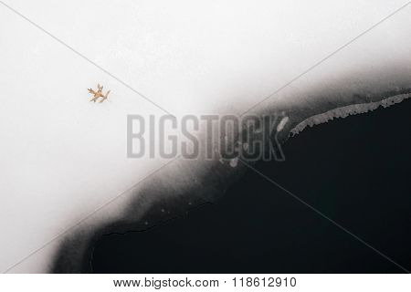 A single tree leaf on melting ice and snow on a lake.