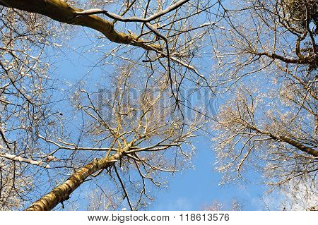 Abstract View Of The Treetops