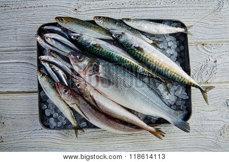 Fresh fishes mix hake sea bass sardine mackerel anchovies