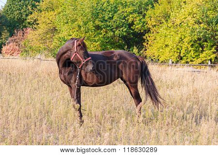 Brown Horse Grazing In The Countryside. Animals