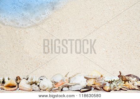 Tropical Shells On A Sandy Beach