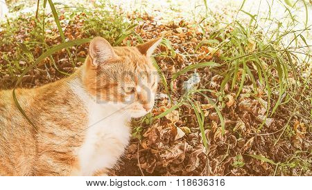 Retro Looking Cat In The Grass