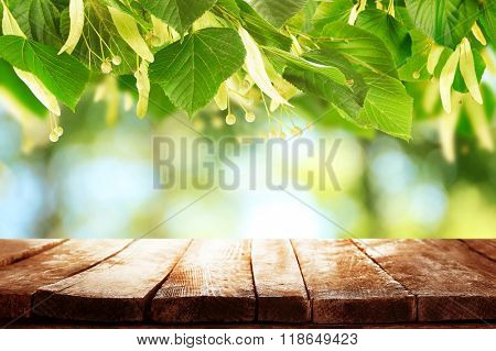 Spring or summer season abstract nature background with green leaves, grass and wooden floor