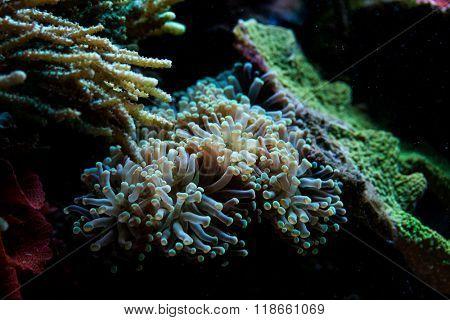 Coral Reef in aquarium