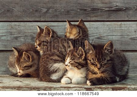 Five Little Kittens Bask In The Sun On A Wooden Background