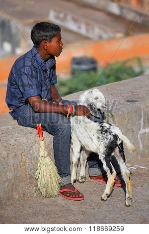 Jaipur, India - November 14: Unidentified Boy Sits On A Stone Wall With A Goat On November 14, 2014