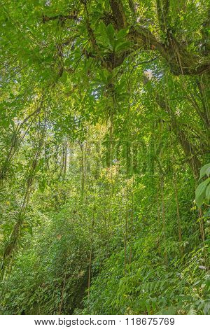 Scene with trees in the dense tropical rainforest
