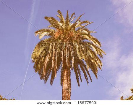 Retro Looking Palm Tree