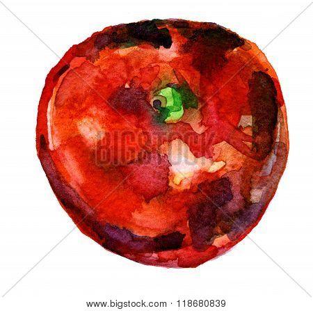 Red Apple Aquarelle