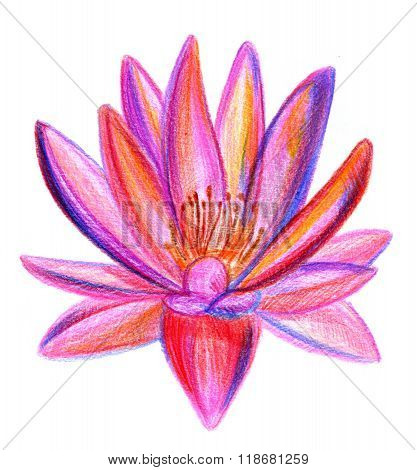 Multicolored Lotus Pencil Drawing