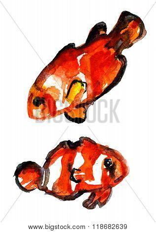 Pleasing Pair Of Goldfish Aquarelle