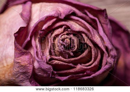 Dead Roses On Vintage Wooden Background