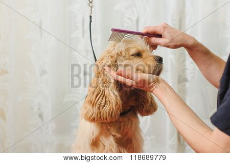 Groomer Combs Dog For Grooming