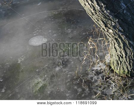 Tree In Melting Ice