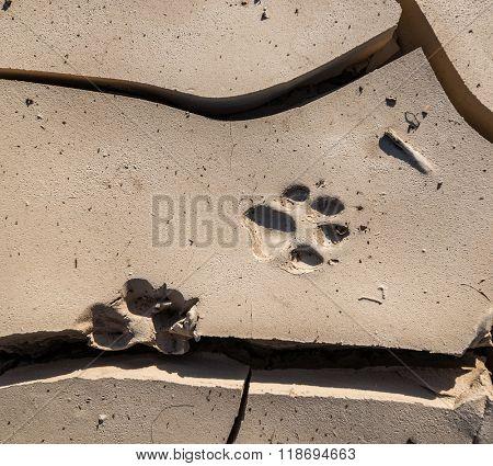 Wild animal paw print mark in the mud.
