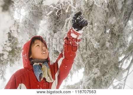 Boy and snow covered tree
