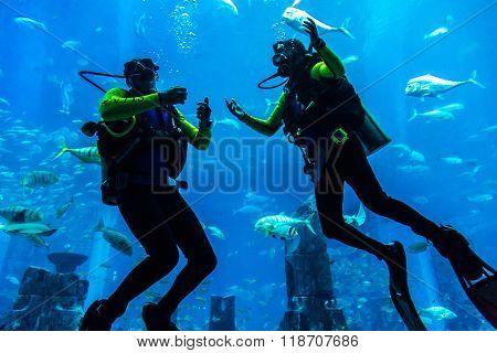 Large Aquarium In Hotel Atlantis In Dubai