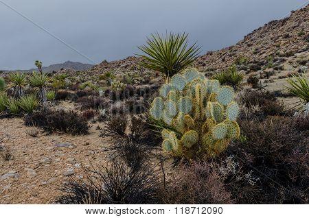 Cactus In Rocky Desert On Rainy Day